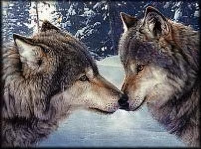 """The Wolf Within by Brenda """"Rion"""" Sewell"""